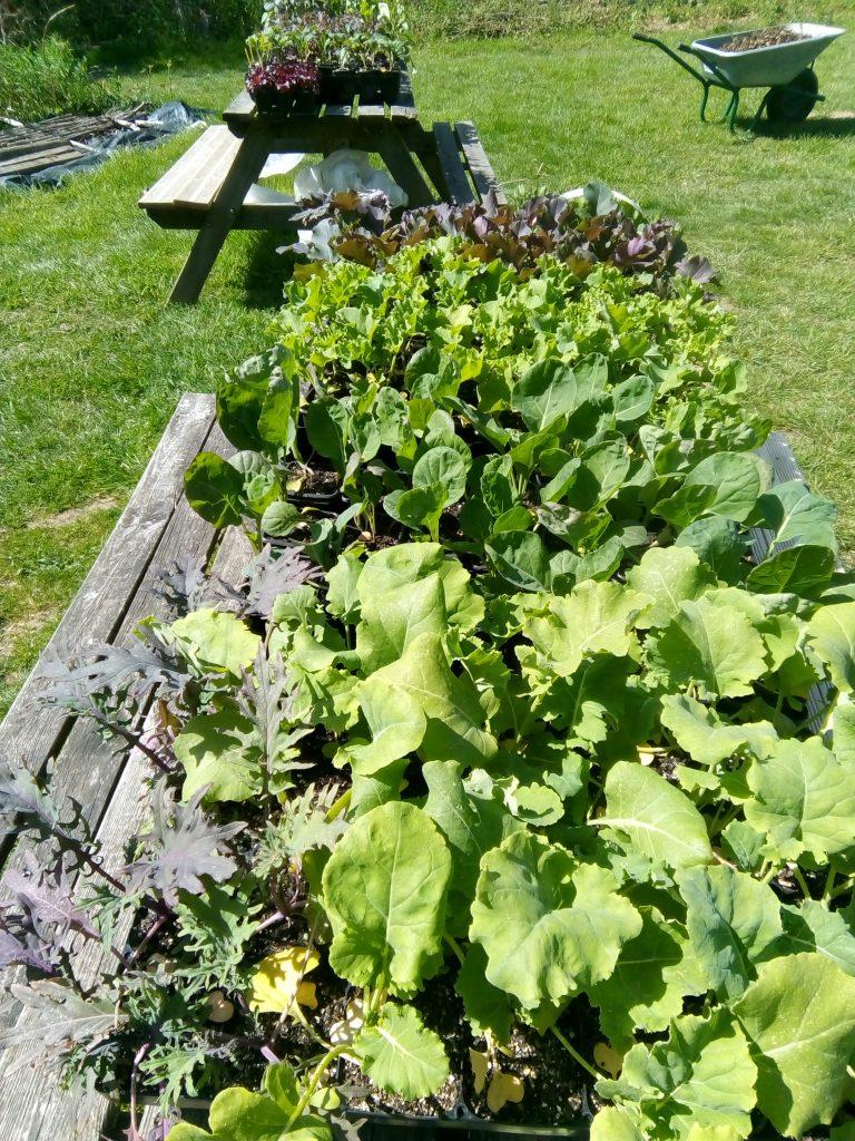 Happy healthy seedlings