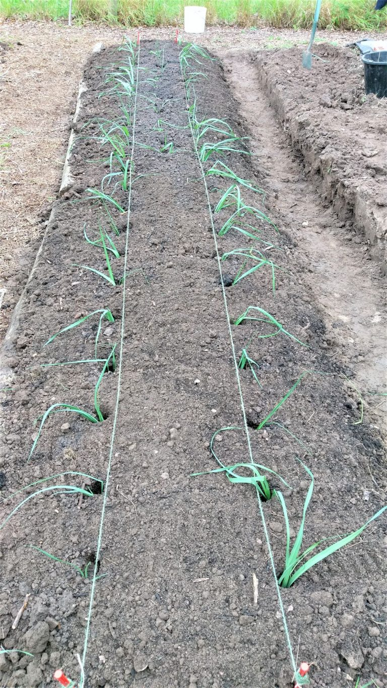 New vegetable bed created