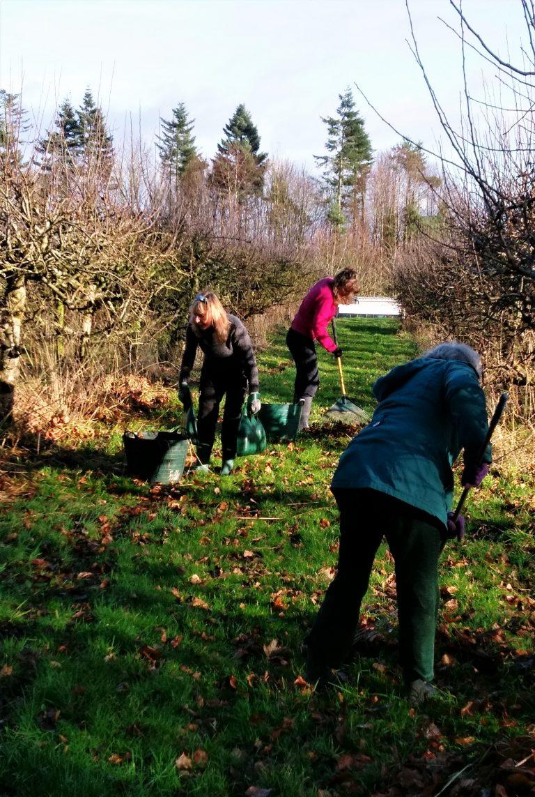 Sunday Work Days in the Community Garden